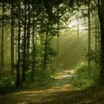 forest path-7