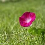 unfold flower-5