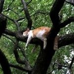 cat restign in tree