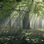 woods sun beams